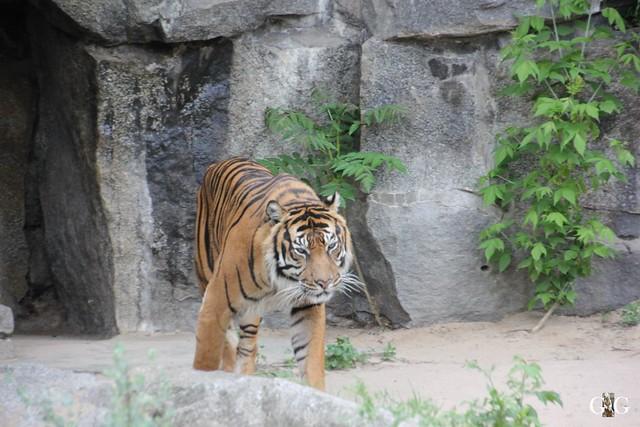 Tierpark Friedrichsfelde 10.05.201521