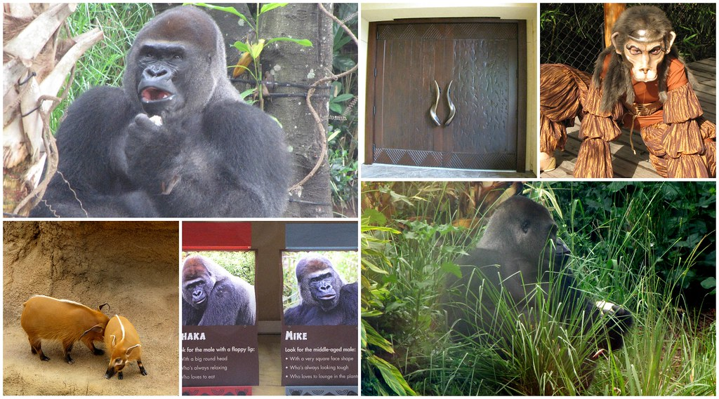 Collage Gorilla Habitat
