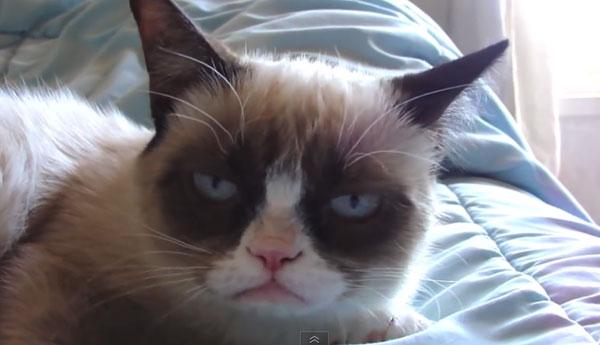 grumpy-cat-sleeping