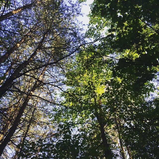 #hiking #nature #igersga #igersgeorgia #georgia #exploregeorgia #discovergeorgia #stateparks #tallulahgorgestatepark #tallulahfalls #tallulahgorge #trees #green #beautifulday