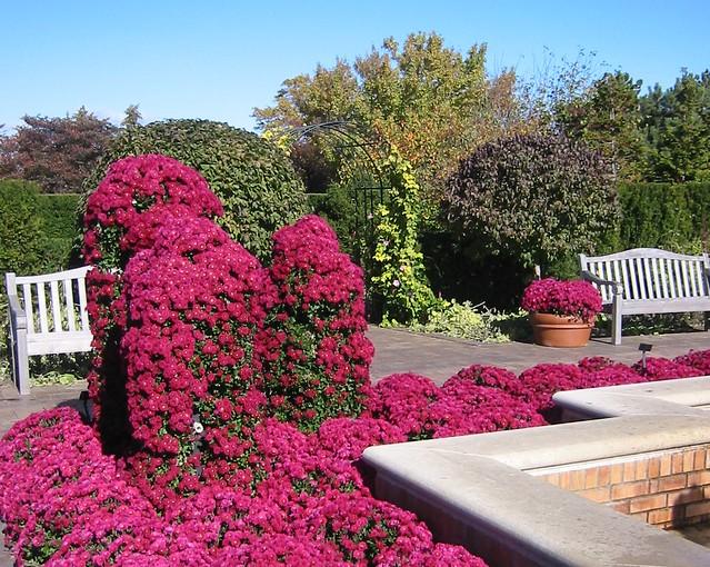 Garden mums chicago botanic garden flickr photo sharing for Chicago botanic garden membership