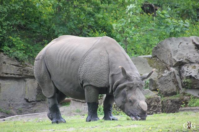Tierpark Friedrichsfelde 17.05.201545