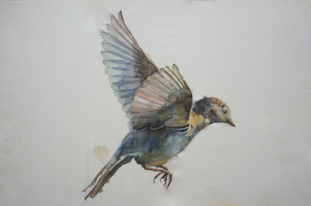 GH Birds 5