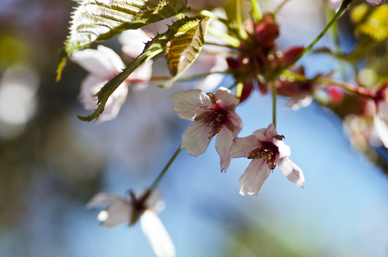 kirsikka15