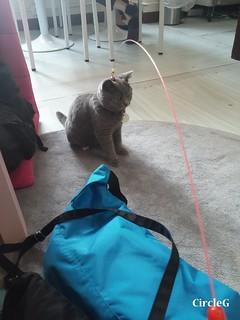 CIRCLEG CAT CAFE 貓貓地 香港 旺角 COOKING HEYHEY (12)