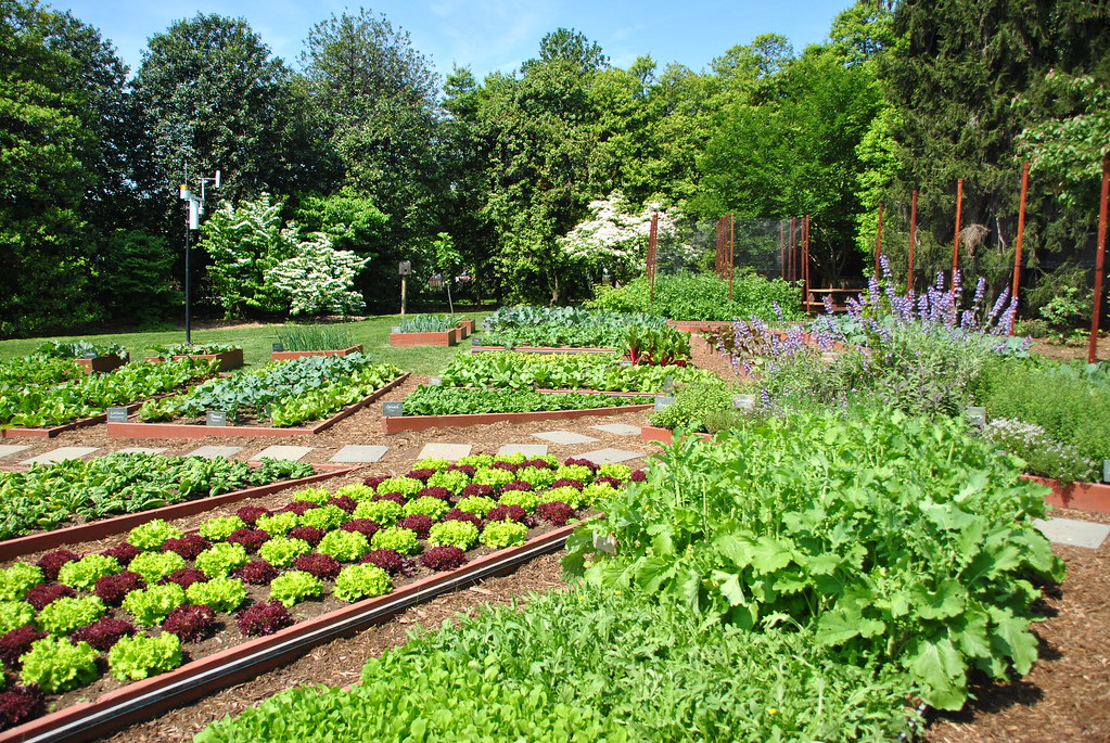 white house kitchen garden angela n flickr