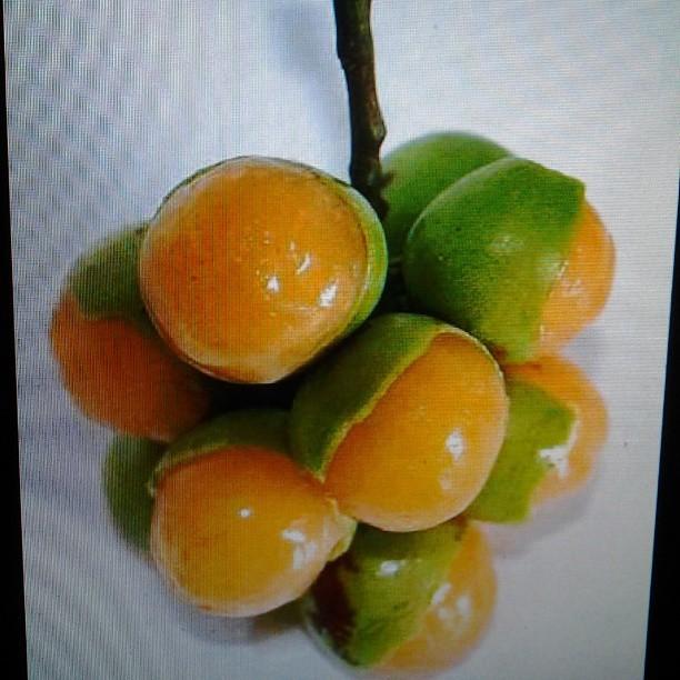 fruits in puerto rico fruit ninja free