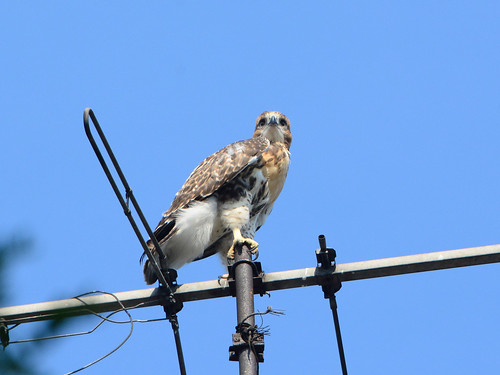 Fairview Ave. Fledgling - 2739