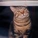 Le chat - À travers les fenêtres - Québec 2012