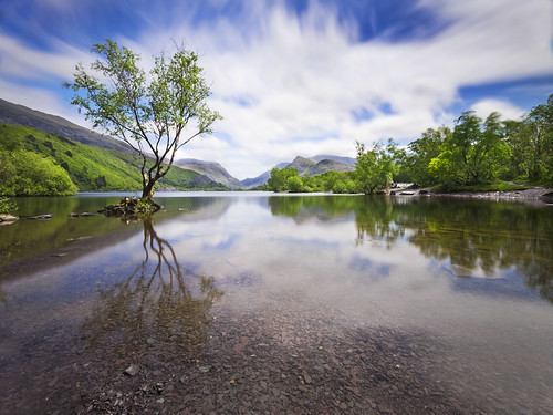 Water Tree, Snowdonia