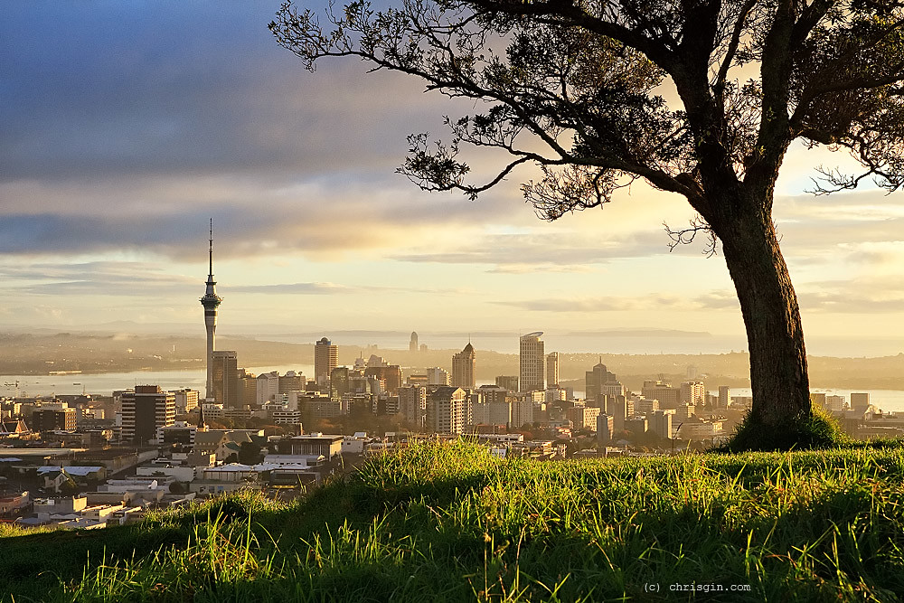 Big tree little city sunrise over auckland from mt for Landscaping auckland