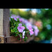 Flowers by Sony a850
