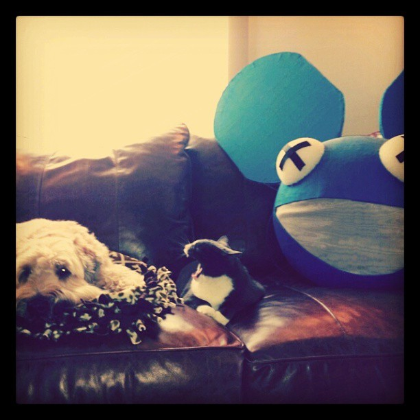 Dog + Cat + @Deadmau5 | Anthony Cerreta | Flickr