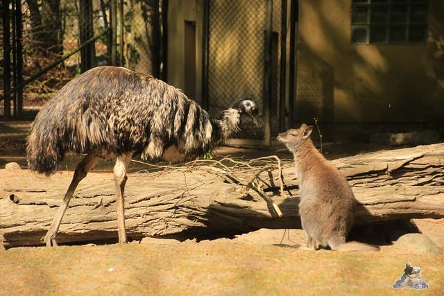 Eisbär Fiete Zoo Rostock 03.05.2015 Teil 3 120