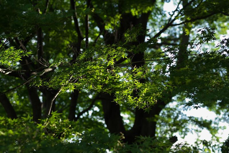 東京路地裏散歩 谷中・日暮里・上野桜木 2015年5月24日