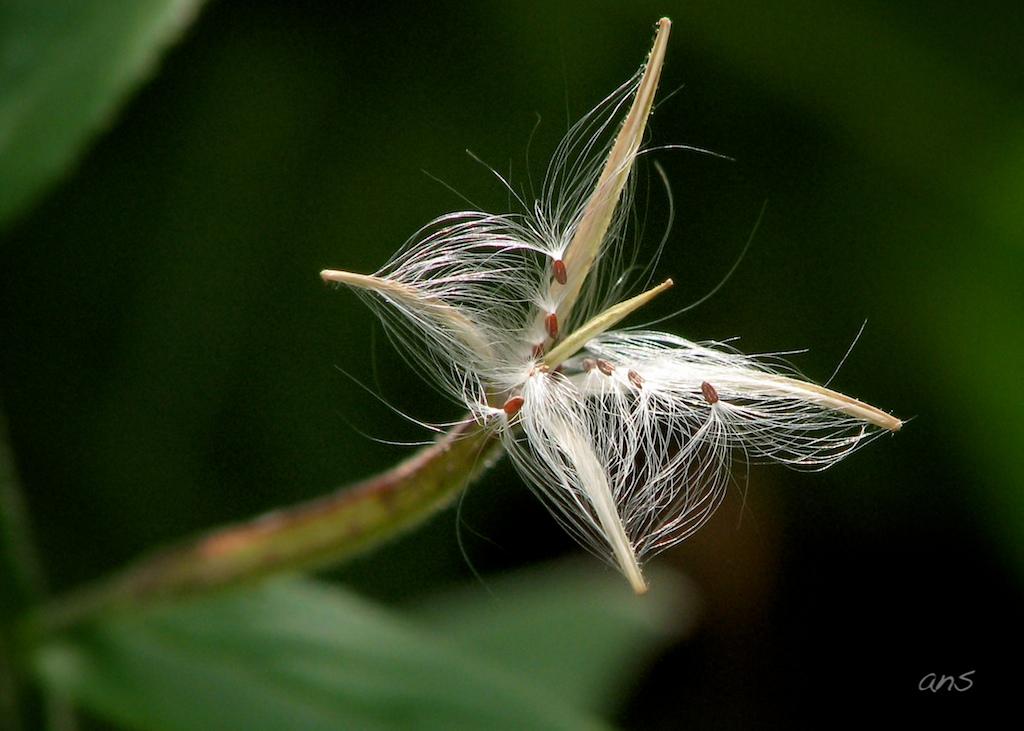 Hairy Seeds 48