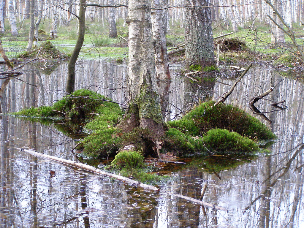 bagno ma e bagno w lesie b kowo 26 kwietnia 2012 r