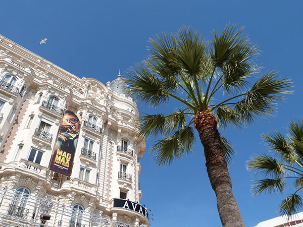 carlton et palmier