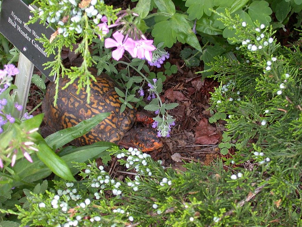 Spring Garden Day