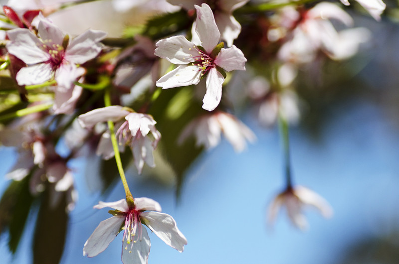 kirsikka14