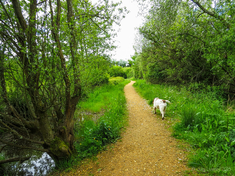 Heading down the path to Lychett Bay