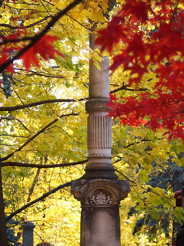 autumn leaves in mount pleasant cemetery toronto