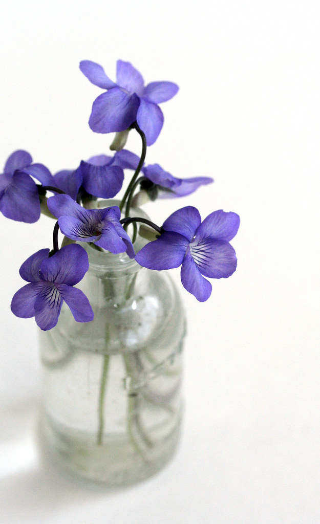 Sweet Violet 1 Noun Violet Any Plant Or Flower Of The