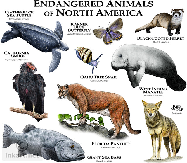 Endangered Species of North America   Flickr - Photo Sharing!