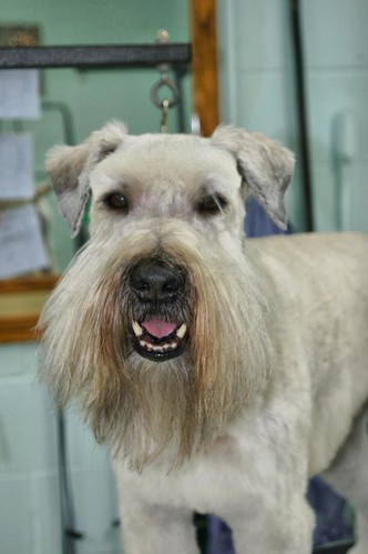 Mobile Pet Grooming In Palm Beach Gardens
