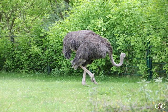 Tierpark Friedrichsfelde 17.05.201549