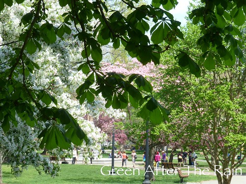 150510d Boston Public Garden _Sh 404