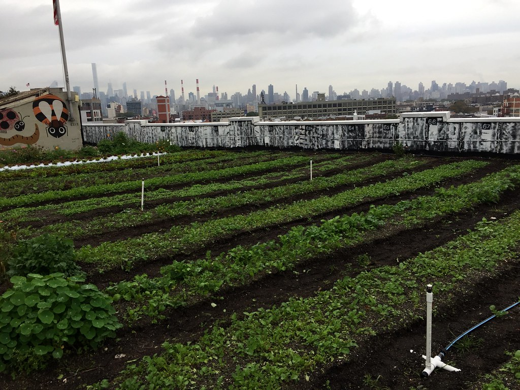 Brooklyn Grange Farm in Queens, NY