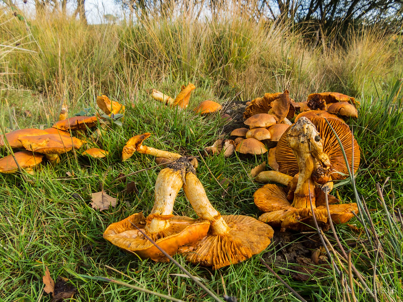 Broken fungi