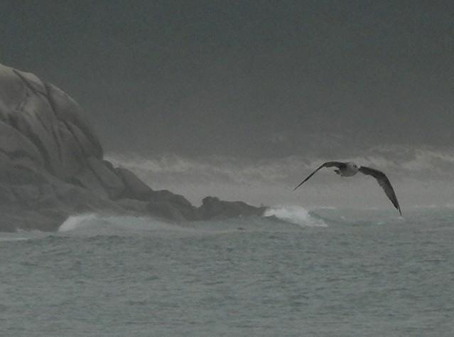 The Rock, The Bird