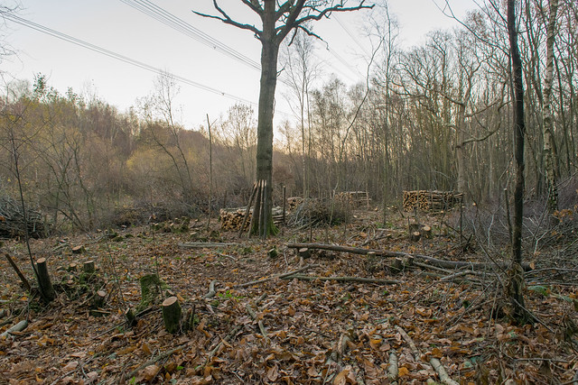 DSC_5495 Coppicing