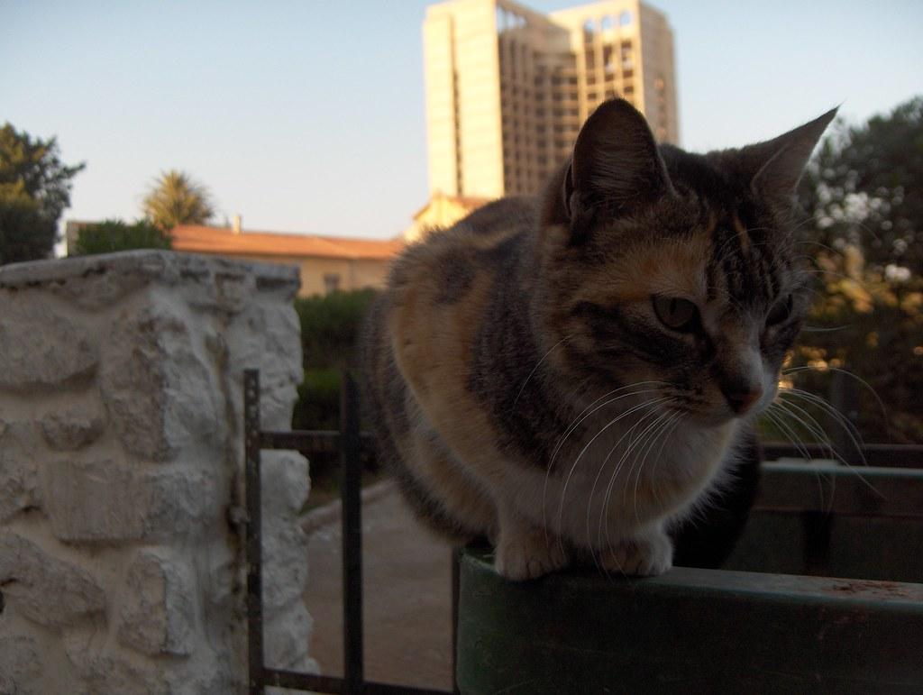 oran chat Prix : 300000 da fixe | catégorie : animaux , chat | produit neuf jamais utilisé |  salam j'ai un chat algérien je le vende pour 30 millions avec.