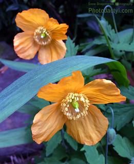 20150516 - Orange Flower