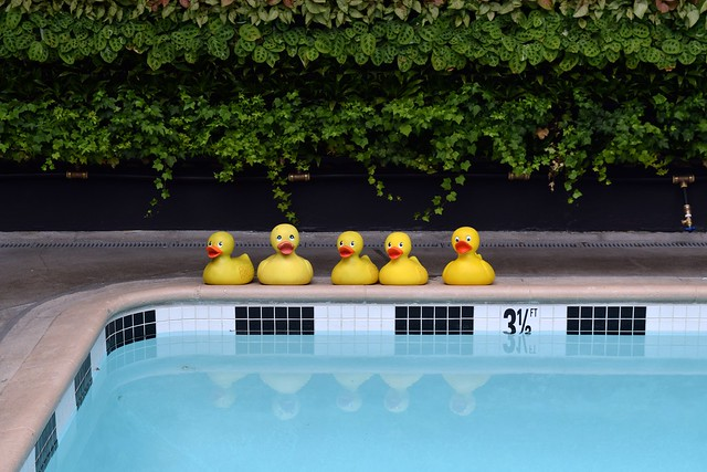 Rubber Ducks at Farmers Daughter Hotel, West Hollywood
