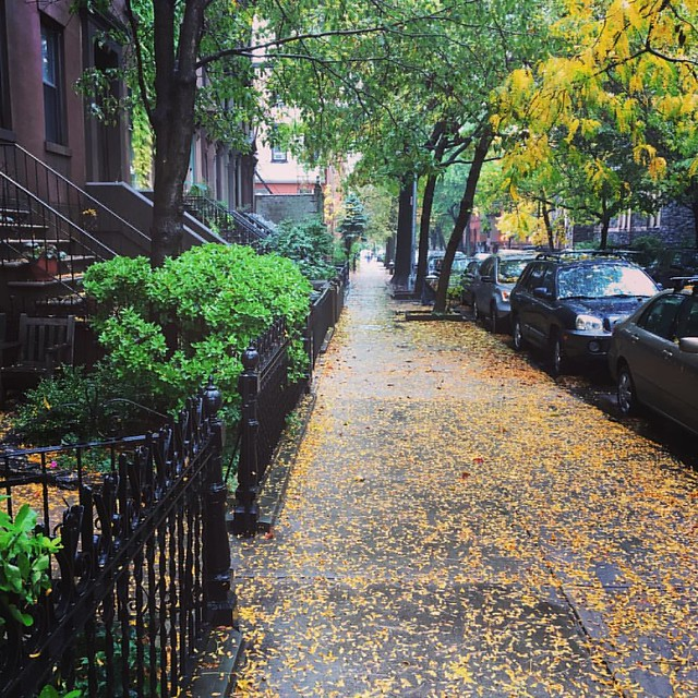 It's beginning to feel like fall here in Carroll Gardens. #mybrooklynlife #carrollgardens