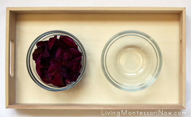 Flower Petal Transfer Tray