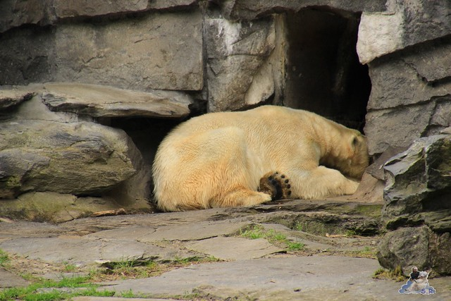 Tierpark Berlin 10.05.2015  126