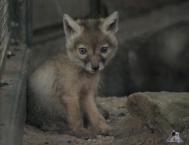 Zoo Berlin 19.05.2015  57