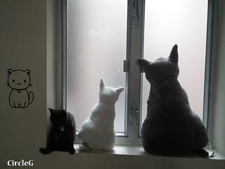 CIRCLEG CAT CAFE 貓貓地 香港 旺角 COOKING HEYHEY (21)