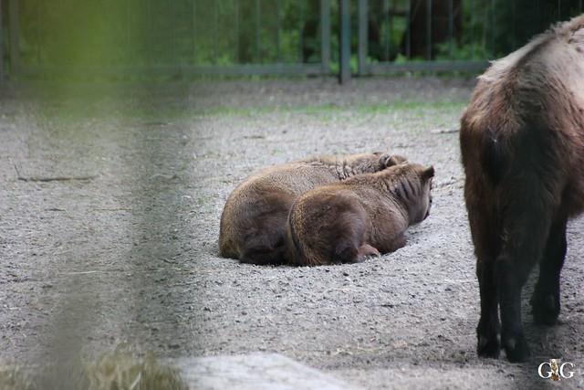Tierpark Friedrichsfelde 17.05.201533