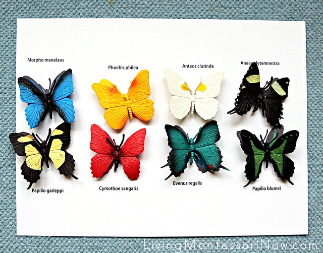 Safari Ltd Butterflies TOOB Key Matching Layout
