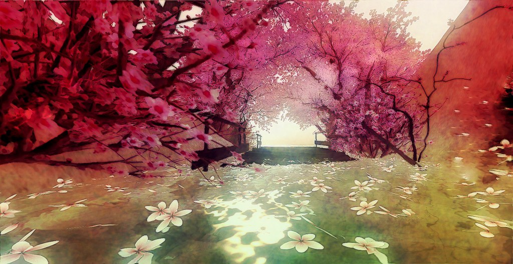 dreams of cherry blossoms.......