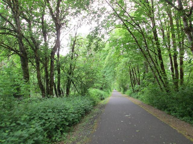 Banks Vernonia Trail, spring green