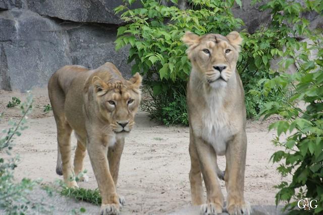 Tierpark Friedrichsfelde 17.05.201561