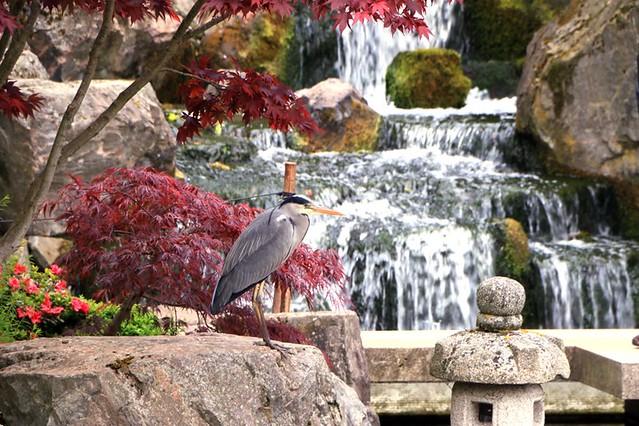 Holland Park: Kyoto garden