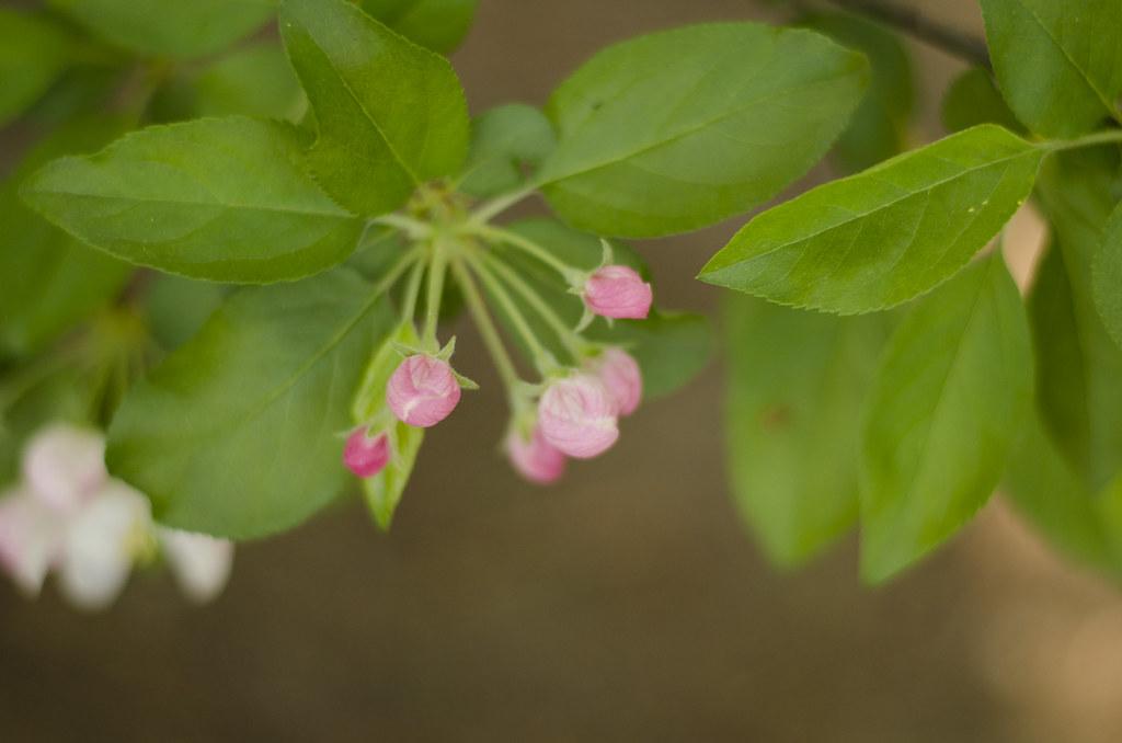 bud to blossom 4